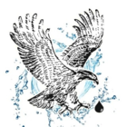 Voir le profil de Les Systèmes d'Eau Eagle Rive-Sud Inc. - Laval