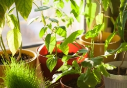 Expert advice on growing an indoor garden