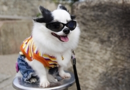 Vancouver's best pet shops for dog clothes