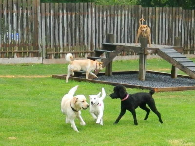 Misty Meadows Dog Kennel