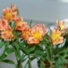 Chicoutimi-Nord Fleuriste - Fleuristes et magasins de fleurs - 418-543-6980