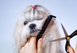Haircuts for cats and dogs: Pet groomers in Calgary