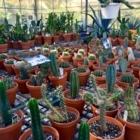 Le Cactus Fleuri Inc - Indoor Plant Stores - 450-795-3383