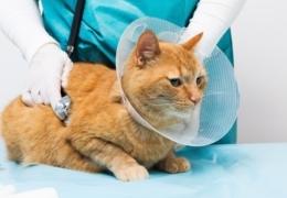 Edmonton's best vets for small pets
