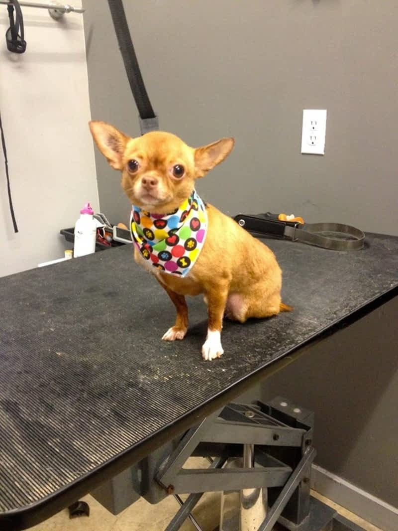 Mobile Dog Grooming Surrey Bc