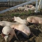 La Ménagerie d'Annie - Élevage de bétail - 450-478-0480