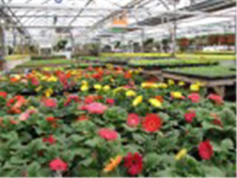 Centre de jardin fred lamontagne rimouski qc 356 ch for Centre de jardin