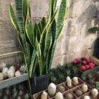 Crown Flora Studio - 647-861-5799