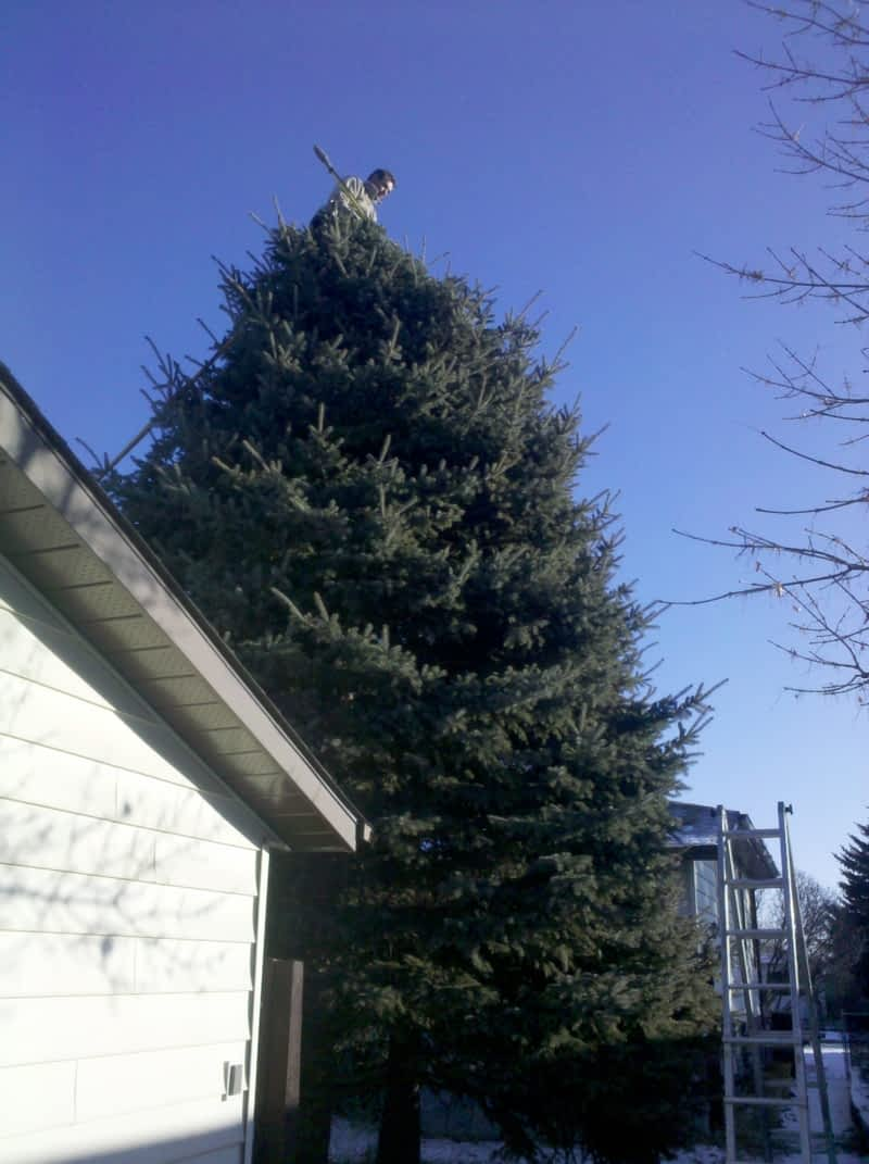 photo J R Tree Service