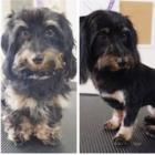 MongMong Pet Stylish Grooming - Pet Grooming, Clipping & Washing