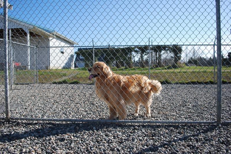 Dog Days Training Vancouver