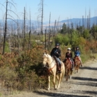 Kelowna Stables - Horse Training