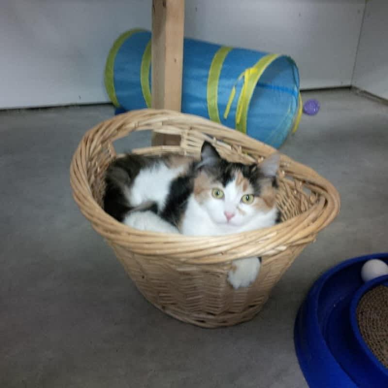 Long Term Cat Boarding Toronto