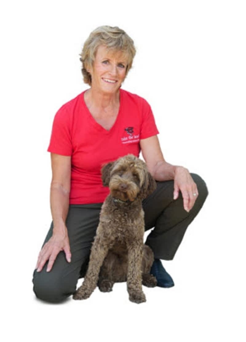 Dog Training School Vancouver