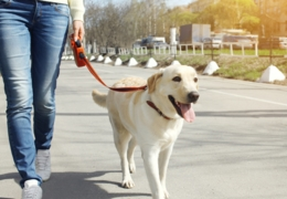 Top dog: Vancouver's best dog-walking companies