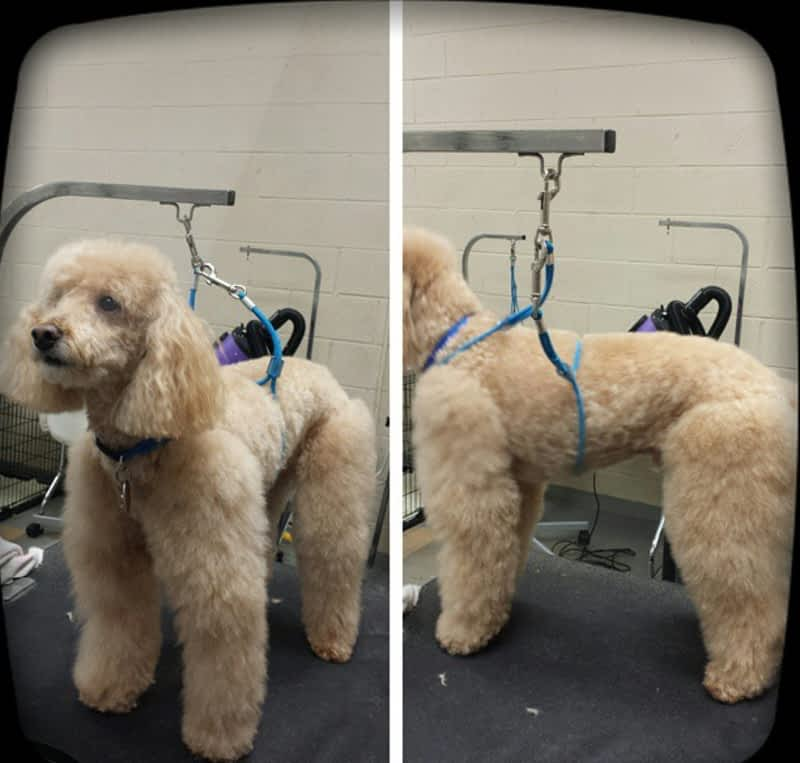Cuttles Dog Grooming Boutique Inc Woodbridge On