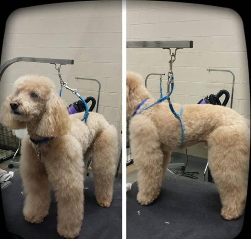 Dog Grooming Woodbridge
