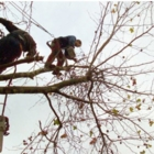 All Acres Professional Tree Service