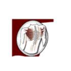 Voir le profil de Lepage Osteopathic Clinic - Montebello