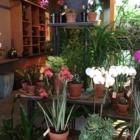 Zen Le Pouvoir Des Fleurs - Fleuristes et magasins de fleurs - 514-529-5365