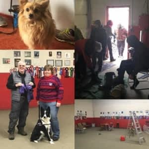 Jane Book Dog Obedience School - Opening Hours - 4696