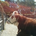 Maplewood Farm - Tourist Attractions - 604-929-5610