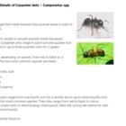 Vancouver Pest Detective - Pest Control Services