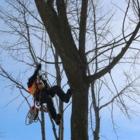 Botanica Tree Services - Landscape Contractors & Designers