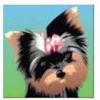 Prestige Dog Grooming - Toilettage et tonte d'animaux domestiques - 506-470-7450