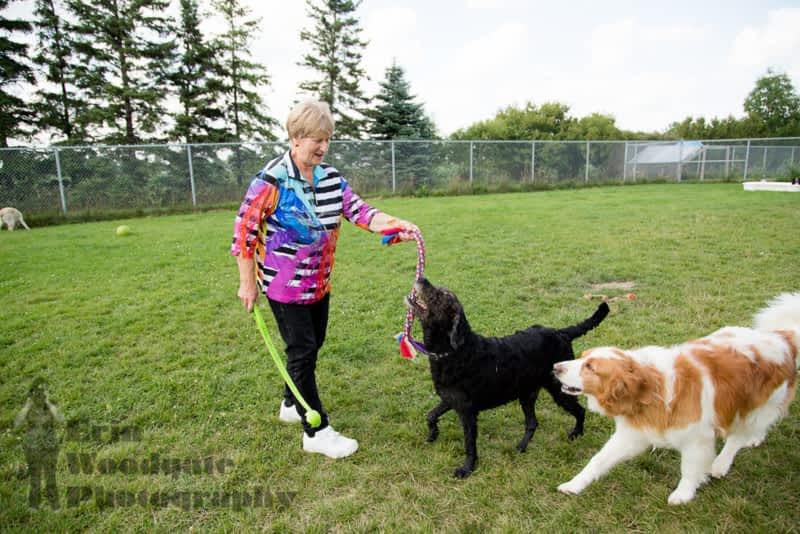 Indoor Dog Park Ottawa