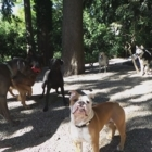 Doggy DooLil Daycare - Chenils - 778-368-2341