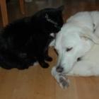 Three Islands Veterinary Services Professional Corp - Veterinarians - 705-738-5149