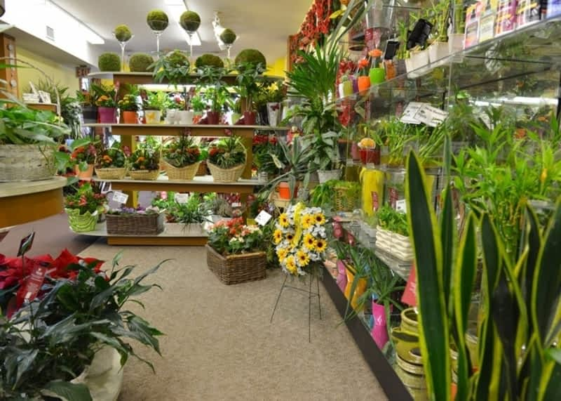 photo Reed's Florists