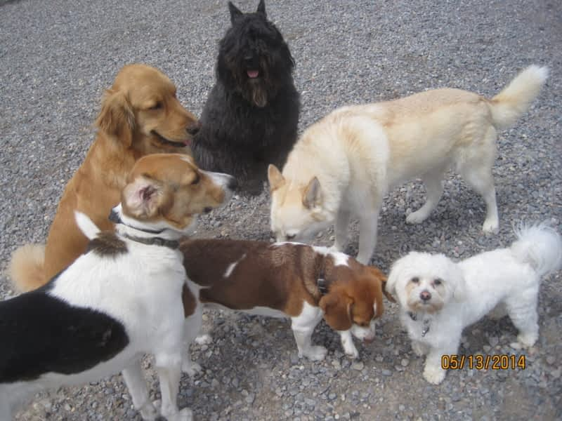 For the love of dogs in home boarding millbrook on for Dog boarding places near me