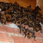 Ontario Wildlife Removal Inc. - Pest Control Services - 226-802-9453