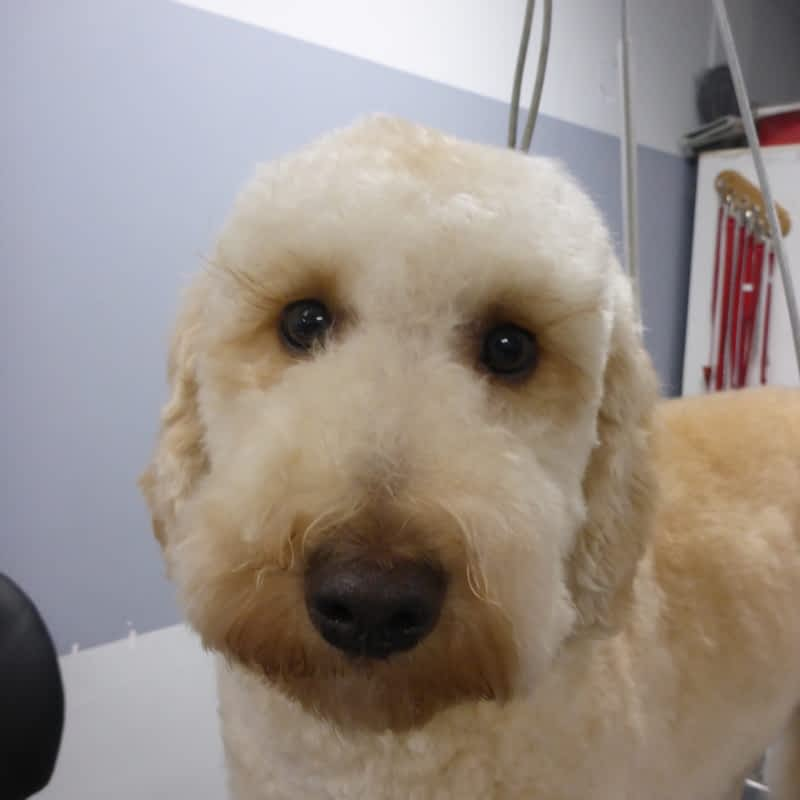 Dog Grooming North Street Scarborough