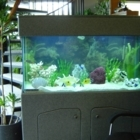 Sea Creations - Aquariums & Supplies
