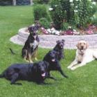Pawsitively Purrfect Petsitting - Services pour animaux de compagnie