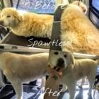 Spawtless - Toilettage et tonte d'animaux domestiques - 250-661-2313