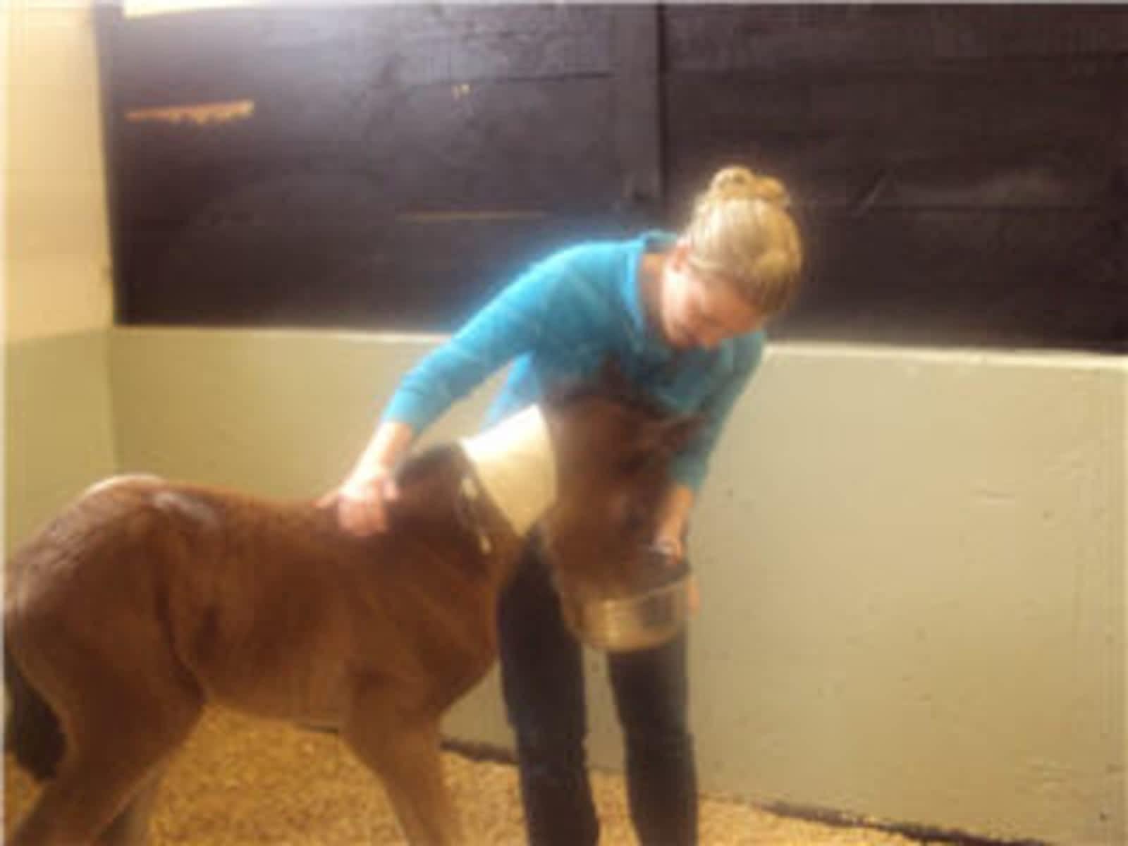 Kamloops Large Animal Veterinary Clinic Ltd - Opening Hours
