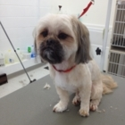 Precious Pets Grooming Salon - Pet Grooming, Clipping & Washing - 250-320-7214