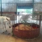 Equine Enrichment - Organisation d'expositions et de concours hippiques