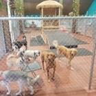 Cocomutt Hut - Pet Care Services - 587-289-2626