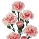 Floral Express - Florists & Flower Shops - 905-634-2131
