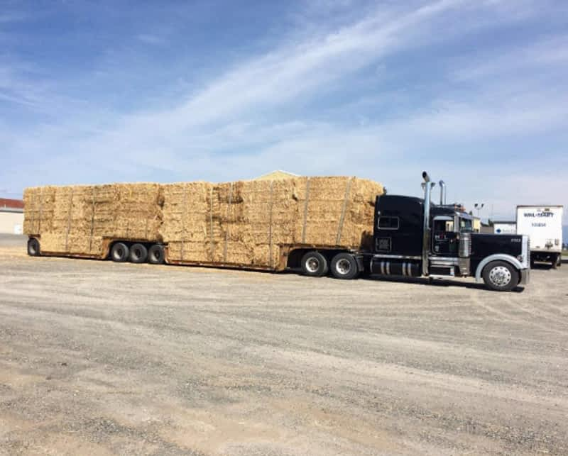 Flat Deck Trucking Companies Bc Bob Skauge Truck Picture