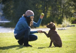 Vancouver puppy training schools