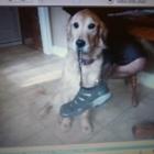 View Bonez & Katnip Pet Services's Clarkson profile