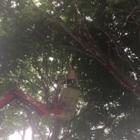 Arbre SRL - Tree Service - 514-754-0608