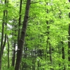 Services BioForêt - Forestry Consultants