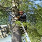 Abattage d'Arbres J B - Tree Service